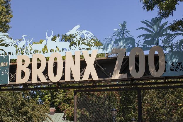 Animan a los visitantes a nueva york a explorar el bronx top management - Oficina de turismo nueva york ...