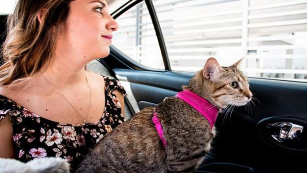 CABIFY PET, CABIFY, PET FRIENDLY